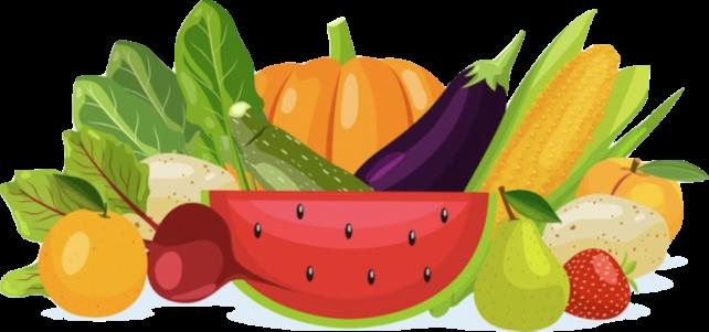 野菜-フレッシュ